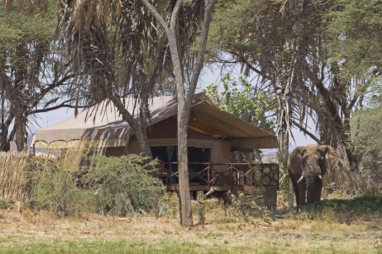 Safaris In Kenya , Africa